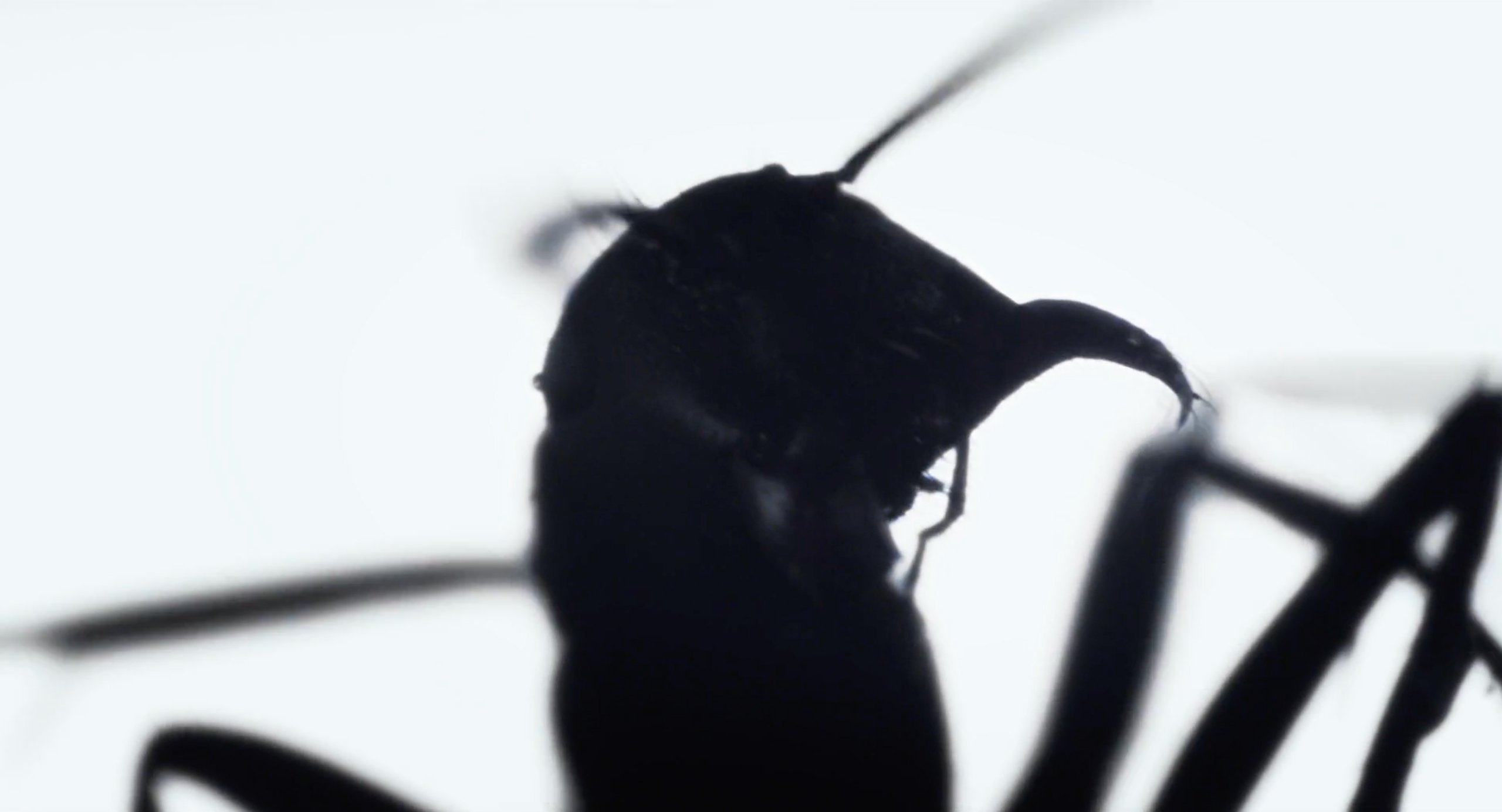 An ant that appears at the beginning of Under the Skin